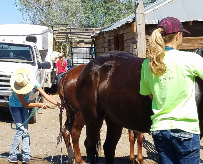 Washing horses, getting ready to head to Elko, NV for the sale weekend