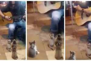 kitten-busker-1462451167-list-handheld-0