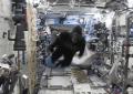 Gorila en la Estación Espacial
