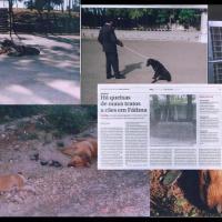 Crueldade Animal no Santuário de Fátima