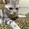 【猫ちゃんの夏にはアルミプレートを(通販風)】なほたて。