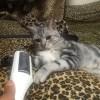 「モフモフ対策」の毛取りブラシと猫ほたて。