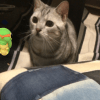やはり、、、「ポケモンGO」と猫ほたて。