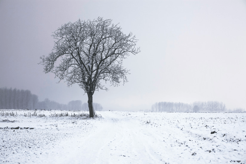 Avoid a Dry House