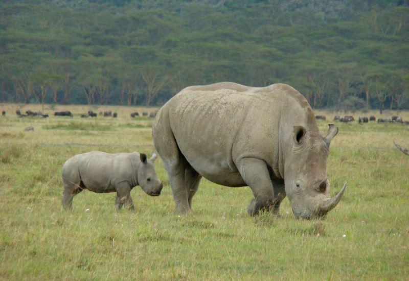 lake-nakuru-kenya-rhino