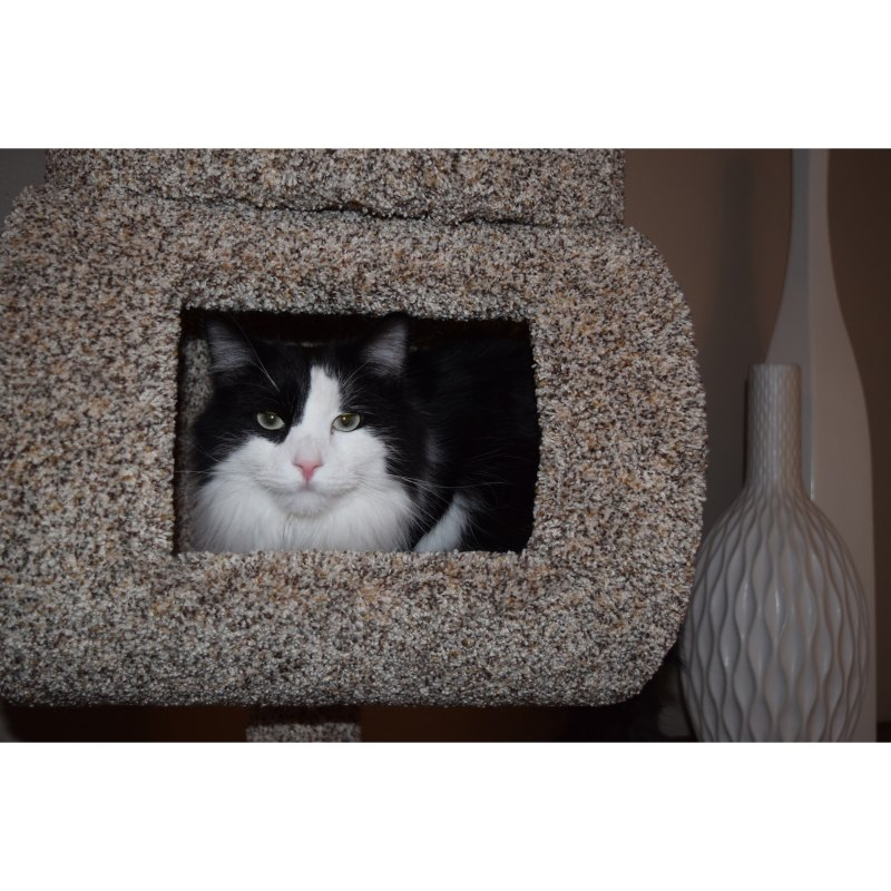 Large Of New Cat Condos