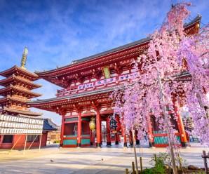 Japonya'dan Araştırma, Lisans, Meslek Yüksek Okulu, Japonca & Japon Kültürü Bursları