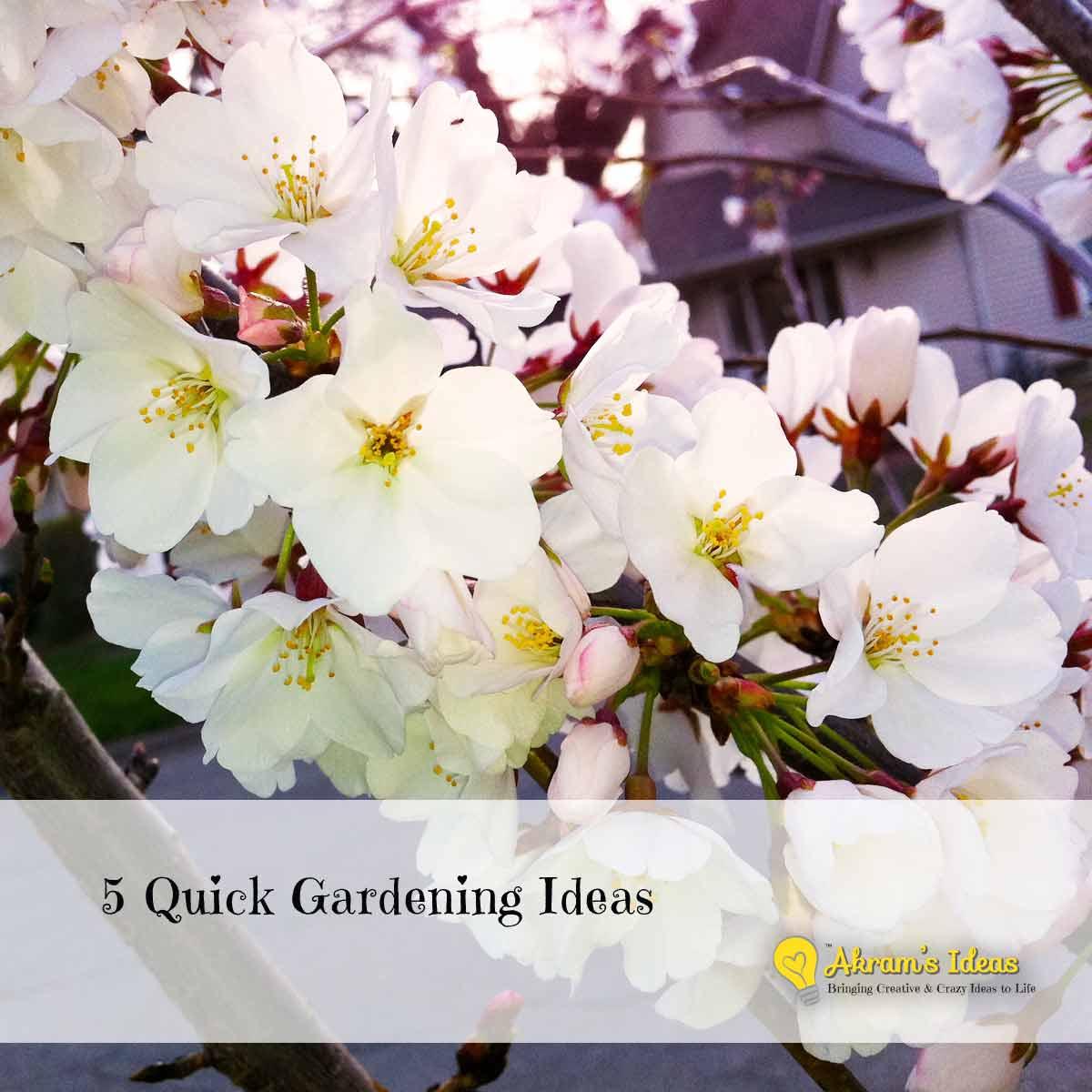 5 quick gardening ideas akram 39 s ideas for Quick garden design ideas