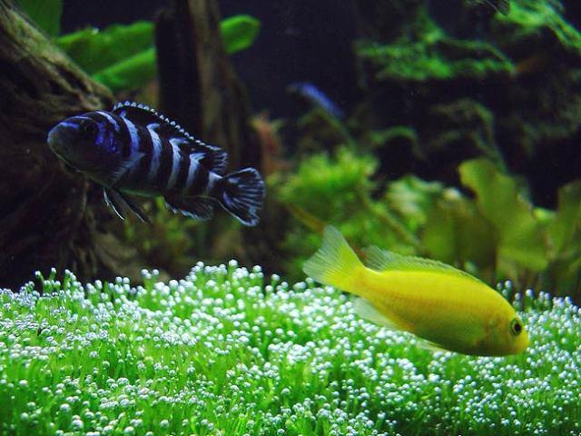 aquarium fish behavior 21