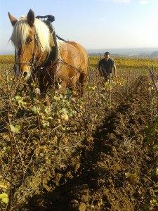 vigne-aladame-cheval