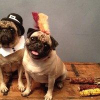 DIY: Pilgrim and Indian Dog Costumes