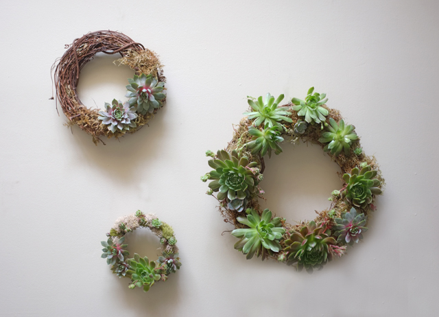 Succulent Wreath Wall