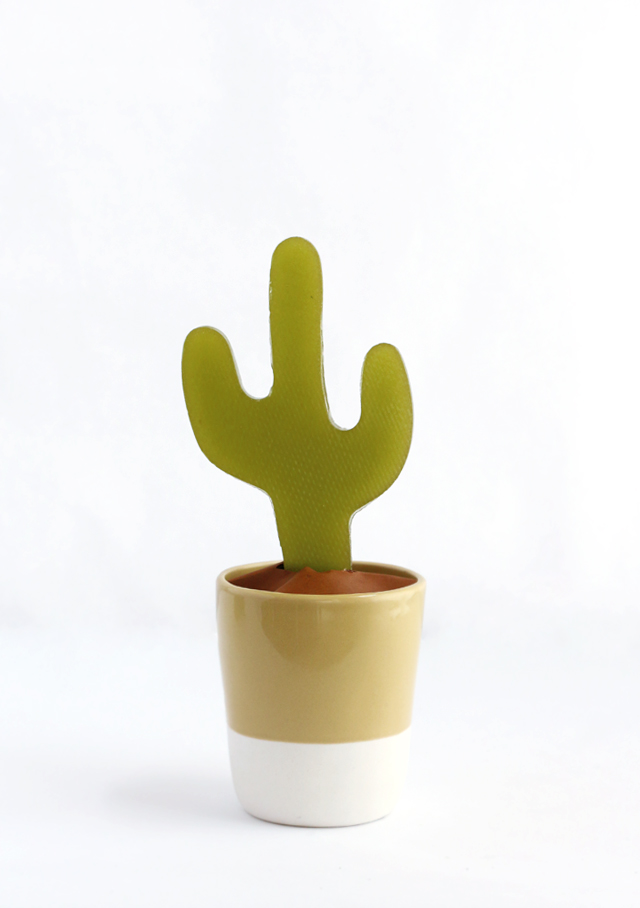 Potted Candy Cactus