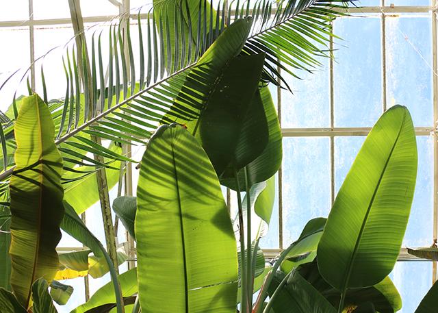 Palms Sunday