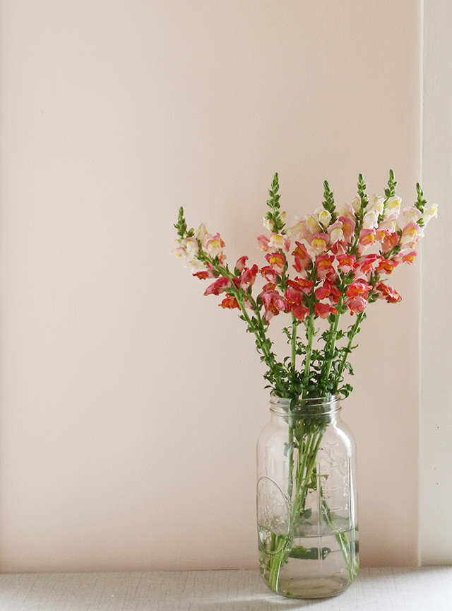 Flowers on Pink Wall