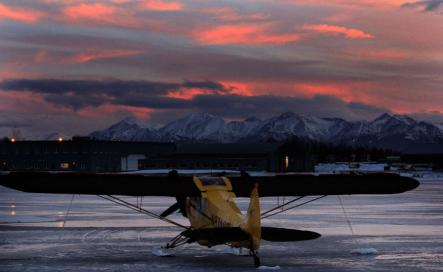 Cub on the ice at sunset. Photo by Rob Stapleton