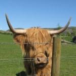 Farm Shop Survey - Loch Leven Larder