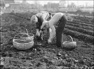 Potato Harvest in 1933 (Canada but you get the idea.)  ust look at the curve of that guy's back...that's gotta hurt)