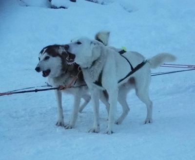 Lapland Blog A 18 400