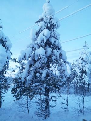Lapland Blog B 23 400