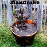Harry Potter Mandrake DIY