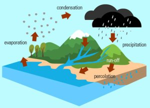 http://www.eschooltoday.com/global-water-scarcity/images/water-cycle.jpg