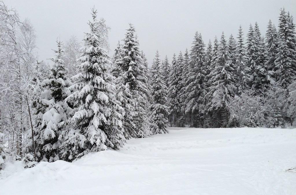 Vidunderlig vinter i Nannestad