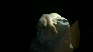 Polaria Isbjørn