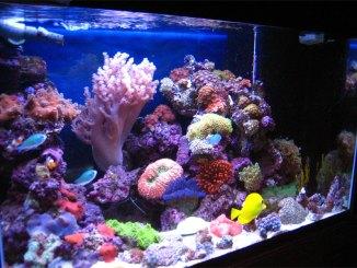 akuarium-air-laut