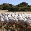 Sardinian pastures – added value for quality farming