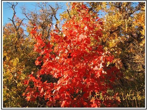 Autumn_in_utah