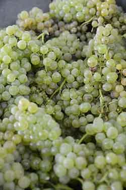 vinho verde cacho 250