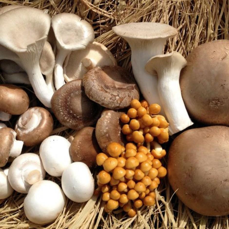 cogumelos-cultivo-proprio