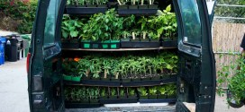 Central coast grown harvest delivered directly to your home