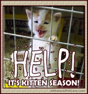 Kitten Puppy Season - Help Animal Rescues