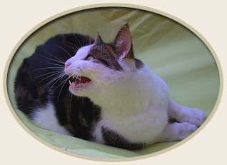Natural Treatment of Feline Bronchial Disease