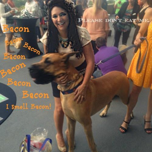 BlogHer dog
