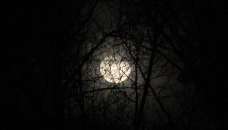 Moon through the trees