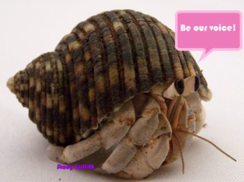 Pet Store Survey Regarding Hermit Crab Care - We are collecting responses to present to pet stores in hopes of changing their minds about in store hermit crab care. Please fill it out AND share it all over! https://crabstreetjournal.typeform.com/to/edsrag