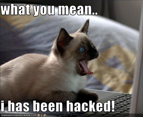 lolcat_hacked