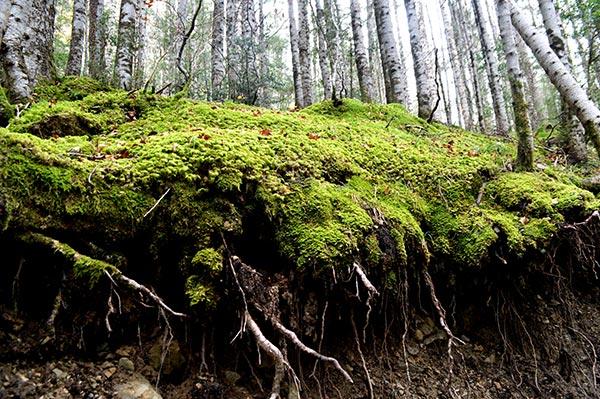 bosque-musgo