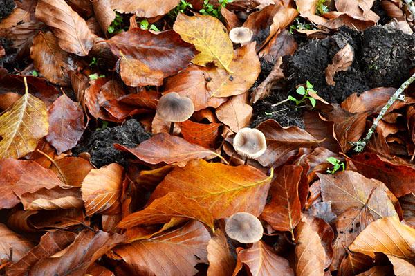 setas-y-hojas