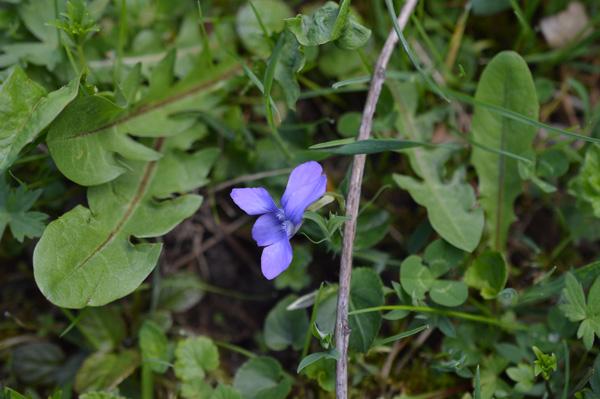 primavera-8