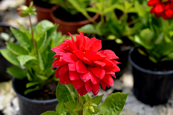 flores-15