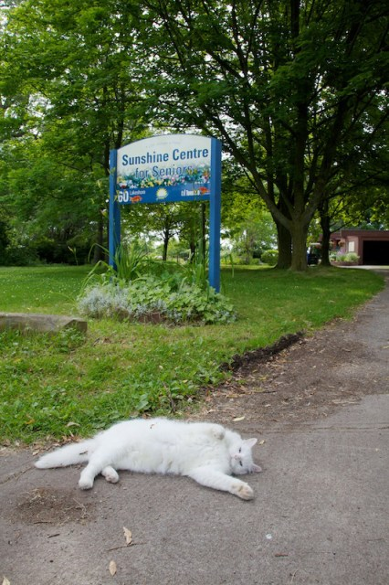 Cat outside seniors centre on Ward's Island, Toronto.  (c) Allyson Scott