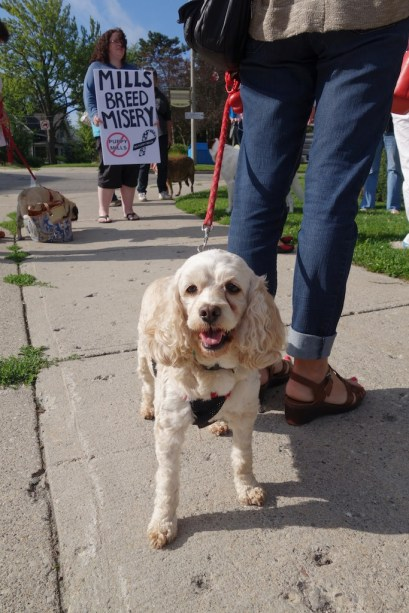 Animal welfare protest