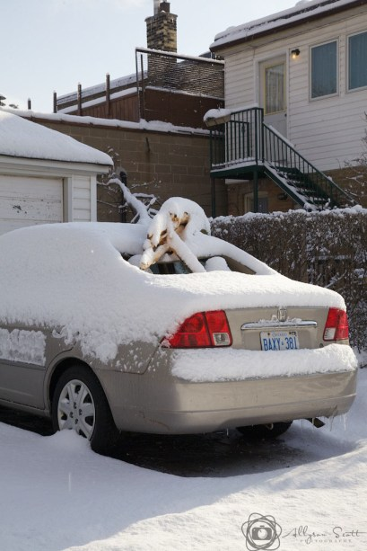 Damaged car after snowfall