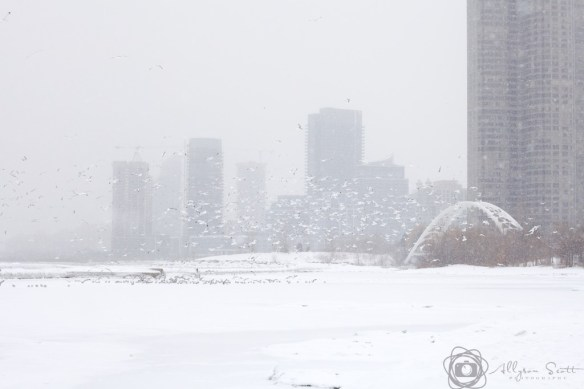 Seagulls flying over Humber Bay Arch Bridge and frozen Lake Ontario in snowstorm, Toronto  (c) Allyson Scott