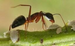 قصة النملة