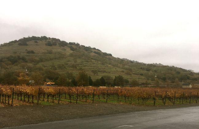 Duckhorn Vineyard